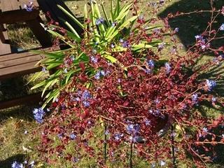 004 17.11.09 007 庭に咲いていた花.jpg