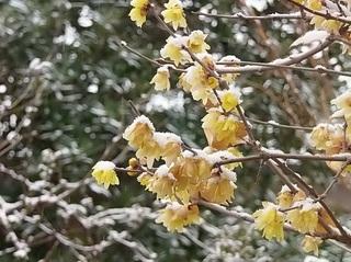 006 19.02.09 001 初雪.jpg