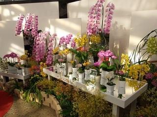 011 18.03.15 029 華麗なる花の貴婦人たち.jpg