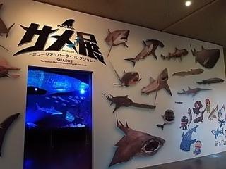 013 17.11.02 045 茨城県自然博物館、サメ展.jpg