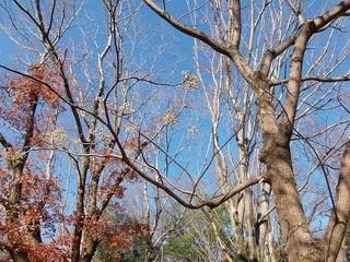 016 17.12.21 030 木々もすっかり葉を落として.jpg