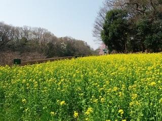 020 18.03.29 038 茨城県自然博物館・花の谷.jpg