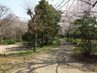 022 18.03.29 049 茨城県自然博物館・遊歩道.jpg