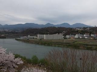 025 17.04.20 信州日帰り旅 082 浅間山・千曲川・桜.jpg