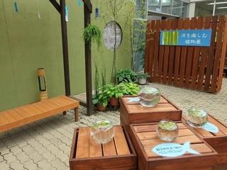 035 17.08.03 077 涼を楽しむ植物展.jpg