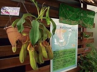 001 17.10.09 001 東南アジアの植物展.jpg