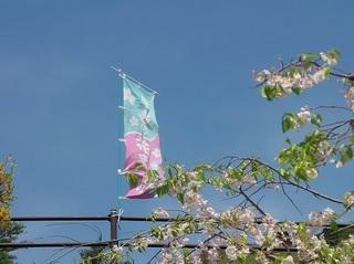 001 18.04.05 004 早春の花まつり.jpg