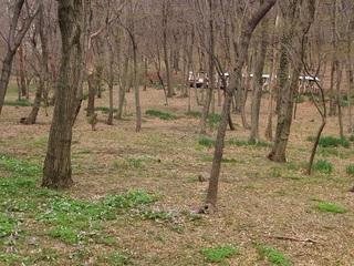 003 17.03.31 009 野草の園.jpg
