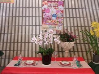 003 18.03.15 042 華麗なる花の貴婦人たち.jpg