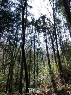004 18.03.25 005 三毳の森.jpg