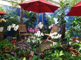 005 17.10.09 009 東南アジアの植物展.jpg