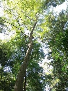 005 17.11.02 016 一言主神社、境内の木々.jpg