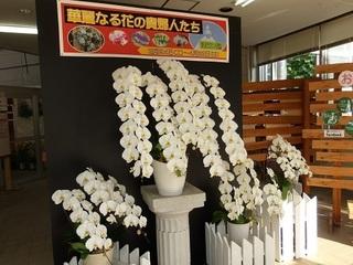 005 18.03.15 010 華麗なる花の貴婦人たち.jpg