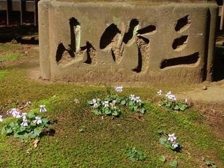 005 18.03.29 015 一言主神社のスミレ.jpg