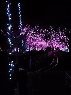 007 16.12.24 東武動物公園イルミネーション 022 太陽恵み鉄道パークライン踏切.jpg
