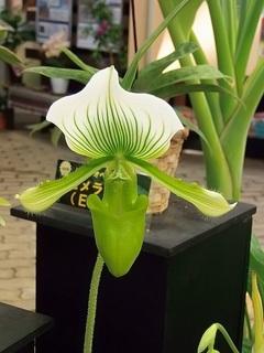 007 17.10.09 013 東南アジアの植物展・ラン.jpg