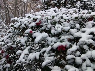 007 19.02.09 005 初雪.jpg