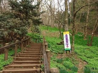 008 17.03.31 018 カタクリの園への階段.jpg