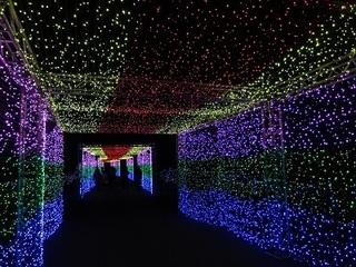 009 16.12.24 東武動物公園イルミネーション 026 光のトンネル.jpg