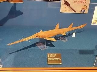 012 17.10.13 018 サメ展・ノコギリザメ.jpg