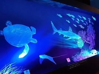 014 17.11.02 033 茨城県自然博物館、サメ展.jpg