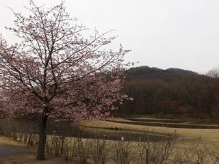 018 17.03.31 041 三毳山と桜.jpg