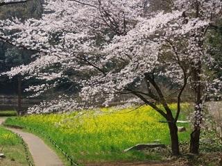 019 18.03.29 036 茨城県自然博物館・花の谷.jpg