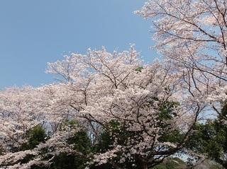 021 18.03.29 040 茨城県自然博物館・古代の広場.jpg
