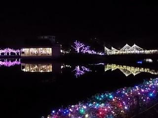 024 16.12.24 東武動物公園イルミネーション 072 白鳥の池.jpg