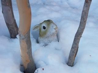025 18.01.23 032 雪の中からウサギ.jpg