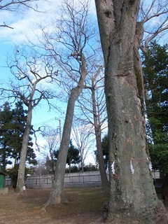 14.01.05 003 御室社の木々.jpg